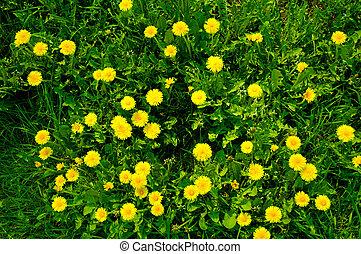 דשא, 6