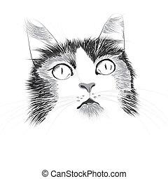 הובל, דוגמה, חתול