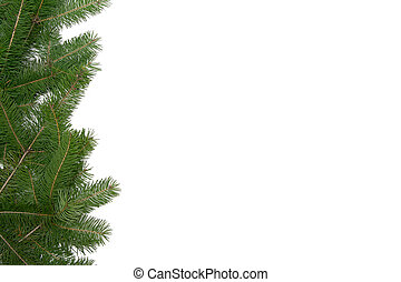 הסגר, עץ, חג המולד