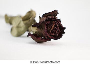 הסתיים, rose., , רקע., יבש, קרוב, אדום לבן, love: