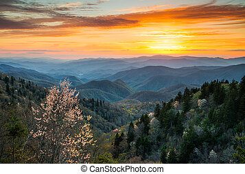 הרים, גדול, צפון, cherokee, אפוף עשן, scen, חנה, לאומי,...