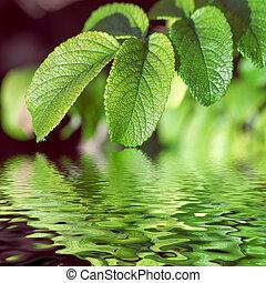 השקה, עוזב, להשתקף, ירוק