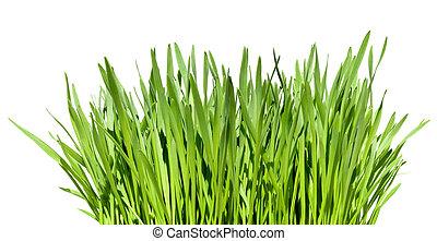 וויסף, דשא