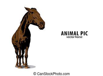 וקטור, סוס