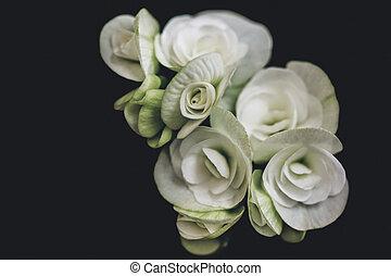 ורדים, לבן, אומנות, רקע, שחור