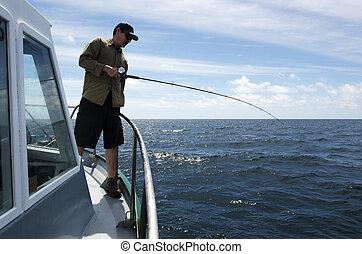 זאילאנד, חדש, לדוג, סאפארי
