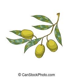 זית, דוגמה, ענף