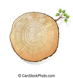 חדק של עץ, חלק, עם, a, קטן, זמורה, עם, ירוק עוזב