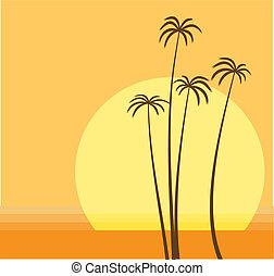 חוף של דקל
