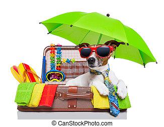 חופשה של קיץ, כלב
