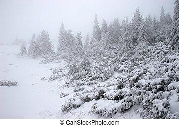 חורף, פ.י.ר., יער, ב, a, סופת שלג