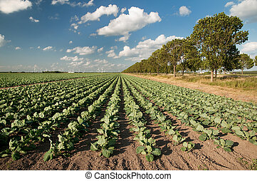 חקלאות, נוף
