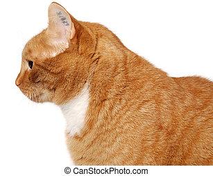 חתול, קעקע