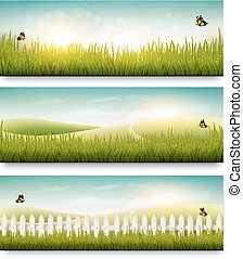 טבע, קיץ, דגלים, עם, דשא ירוק, וכחול, sky., וקטור