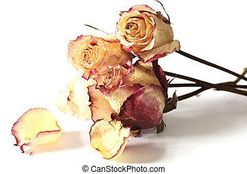 יבש, ורדים, לבן, נגד, צרור