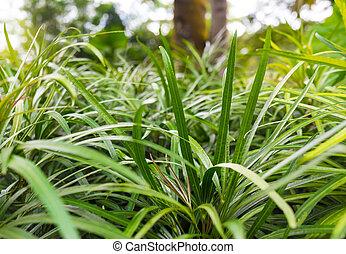 יופי טבעי, תקציר, רקעים, bokeh, ירוק