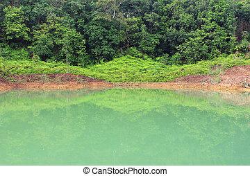 יער, אגם