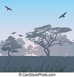 יער, ב, עלית שמש
