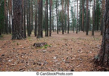 יער, דאב