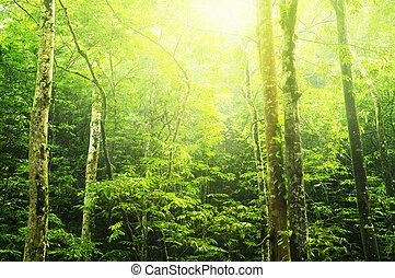 יער ירוק