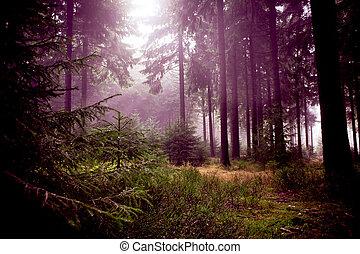 יער מעורפל