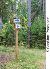 יער, פגר, תמרור, עם, להצביע, חיצים