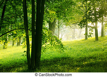יער, קיץ