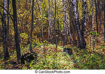 יער של סתו