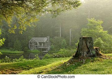יפה, בנין, ישן, עשיר, בוקר, יער, וואטארמיל, טלול