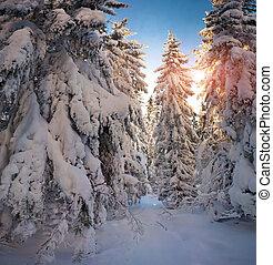 יפה, הר, חורף, עלית שמש, יער
