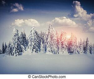 יפה, הר, עלית שמש, חורף, forest.