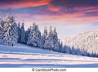 יפה, חורף, בוקר, עם, שלג כיסה, עצים.