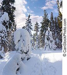 יפה, חורף, פנורמה, עם, שלג כיסה עצים