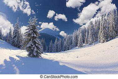 יפה, נוף של חורף, עם, שלג כיסה, עצים.