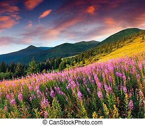יפה, נוף של סתו, בהרים, עם, ורוד, flowers.