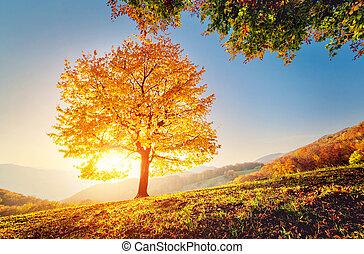 יפה, עצים של סתו