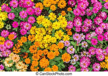 יפה, פרחים, רקע
