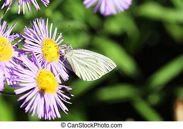יפה, פרפר, פרחים, גן, קפוץ