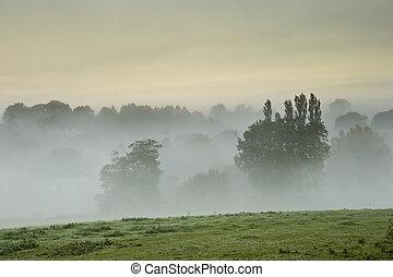 יפה, רבדים, לערבב, קטע, תחום, ערפל, יער, אובך, עלית שמש, לפני