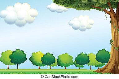 ירוק כחול, שמיים ברורים, עצים