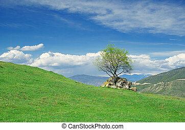 ירוק, לגלגל גבעות, מתחת, שמיים כחולים