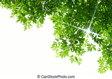 ירוק עוזב, בלבן, רקע