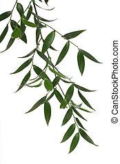 ירוק, ענף