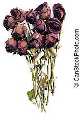 ישן, נגד, ורדים, יבש, רקע, אדום לבן