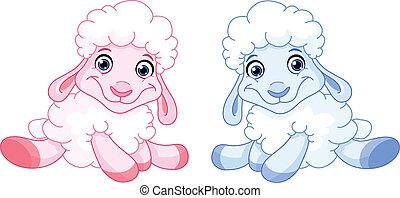 כבש של תינוק
