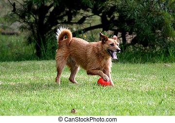 כדור, כלב