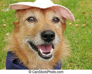 כובע, כלב