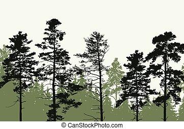 כוניפאראוס, פסגות, שמיים, ברור, יער של עץ, מתחת