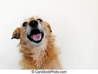 כלב, גחך, שמח
