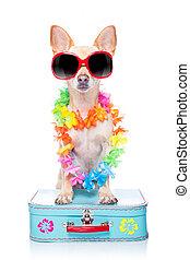 כלב, חופשות של קיץ